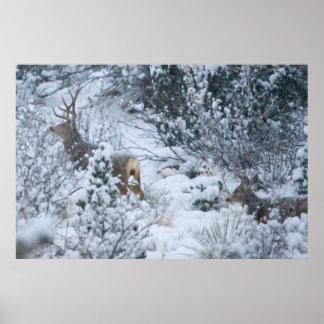 Ciervos en nieve póster