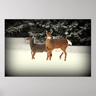 Ciervos en poster de la nieve