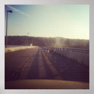Ciervos en un puente impresiones