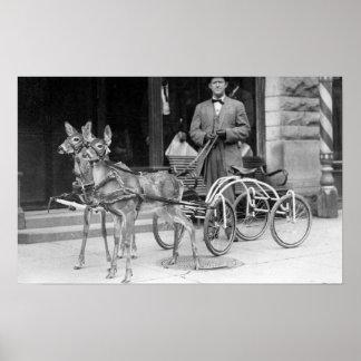Ciervos entrenados aprovechados a un trineo impar  póster