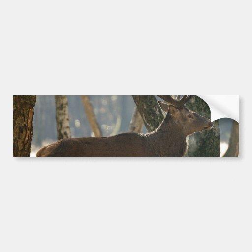 ciervos etiqueta de parachoque