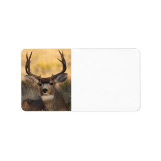 ciervos etiquetas de dirección