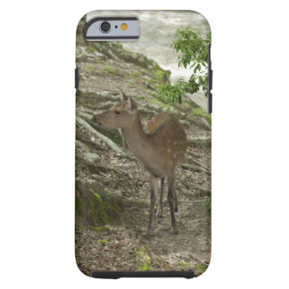 Ciervos Funda Para iPhone 6 Tough