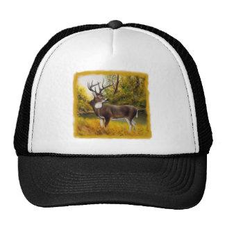 Ciervos grandes que se colocan en arboleda en prod gorras de camionero