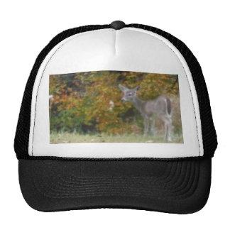 Ciervos jovenes de Bambi con los árboles de la caí Gorro