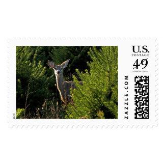 Ciervos jovenes en sello de los árboles de pino