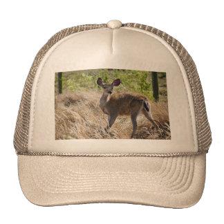 Ciervos jovenes gorra