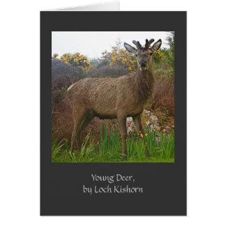 Ciervos jovenes, por la tarjeta de felicitación de