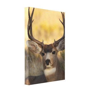 ciervos lona estirada galerías