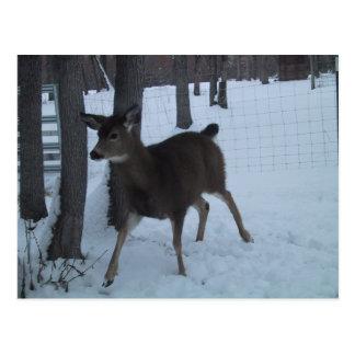 Ciervos lindos de la gama que caminan en las nevad postales