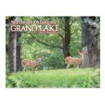 Ciervos magníficos de la postal de Oklahoma del la