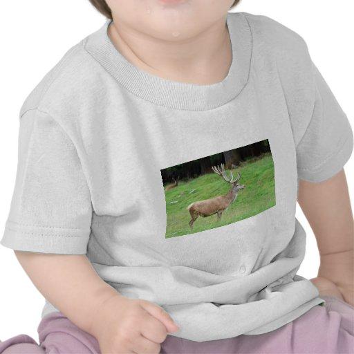 ciervos masculinos camiseta