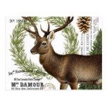 ciervos modernos del invierno del arbolado del tarjetas postales