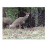 Ciervos oscuros de los mamíferos de Utah del Postal
