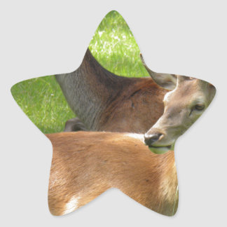 Ciervos Pegatina En Forma De Estrella