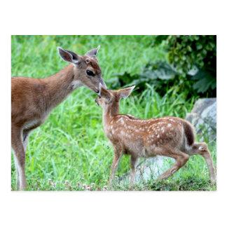 Ciervos que besan el cervatillo postal