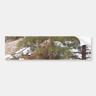 Ciervos que comen el cono del pino en árbol pegatina para auto