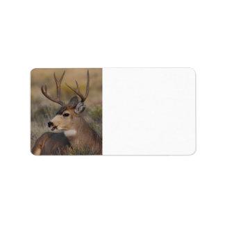 ciervos que hablan etiquetas de dirección