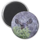 Ciervos que ocultan en arbustos imanes de nevera
