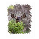 Ciervos que ocultan en arbustos postal