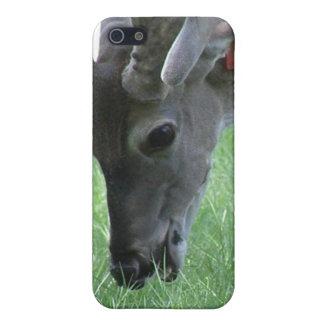Ciervos que pastan el caso del iPhone 4 iPhone 5 Carcasas