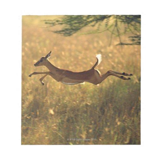 Ciervos que saltan a través de campo blocs