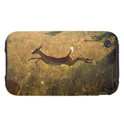 Ciervos que saltan a través de campo iPhone 3 tough cárcasa