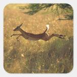 Ciervos que saltan a través de campo calcomania cuadradas personalizada