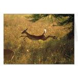 Ciervos que saltan a través de campo tarjetón