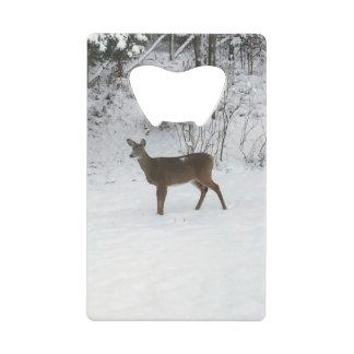 Ciervos que se colocan en nieve