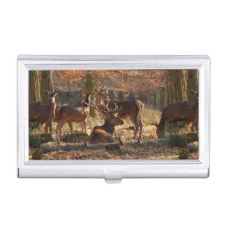 Ciervos rojos en la madera otoñal caja de tarjetas de negocios