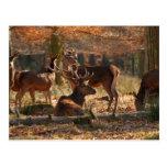 Ciervos rojos en la madera otoñal postal
