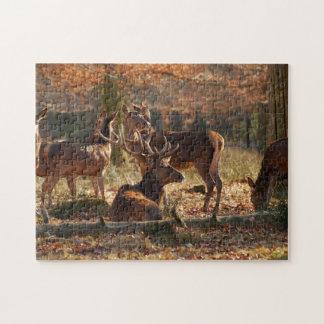 Ciervos rojos en la madera otoñal rompecabeza