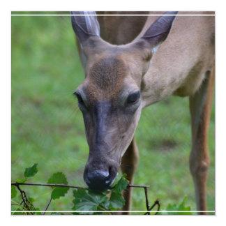 Ciervos Snacking Comunicados Personales