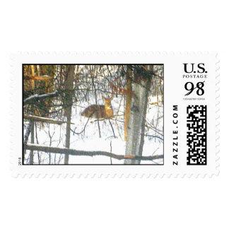 Ciervos Stamps* real de la vidita Estampilla
