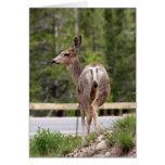 ciervos tarjeta de felicitación