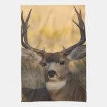 ciervos toalla