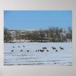Ciervos y Turquía-Pasto junto Impresiones