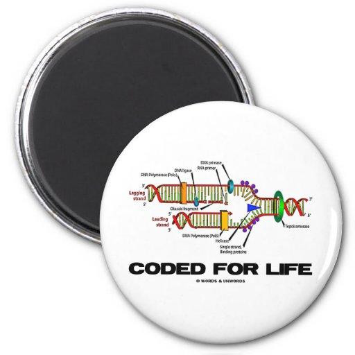 Cifrado para la vida (réplica de la DNA) Imanes