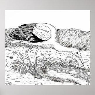 Cigüeña blanca póster