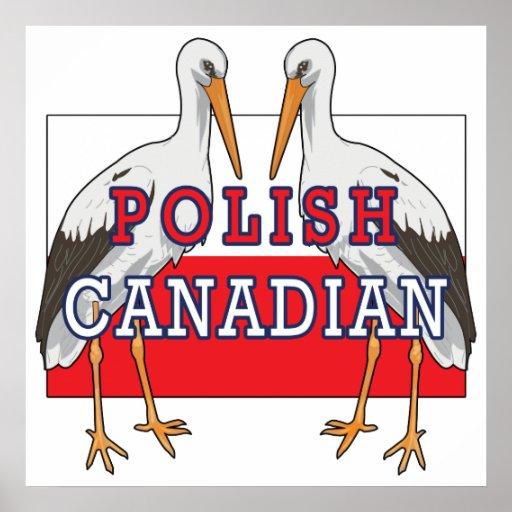 Cigüeña canadiense polaca póster