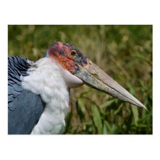 Cigüeña de marabú del retrato tarjeta postal