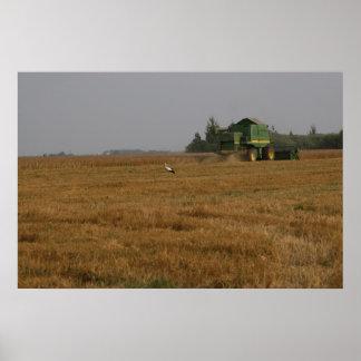 Cigüeña en campo de maíz impresiones