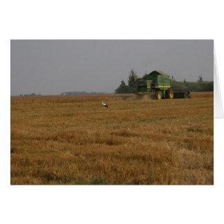Cigüeña en campo de maíz felicitacion