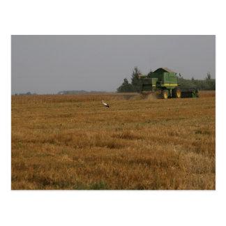 Cigüeña en campo de maíz tarjetas postales