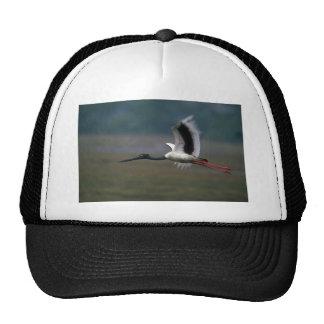 cigüeña Negro-necked en vuelo Gorros