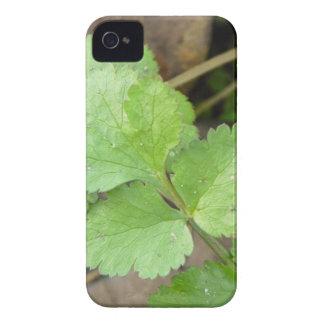 Cilantro Case-Mate iPhone 4 Case