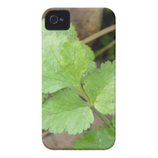 Cilantro iPhone 4 Cases