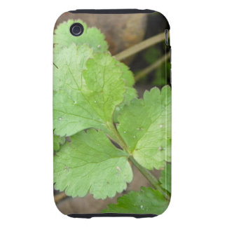 Cilantro Tough iPhone 3 Cases