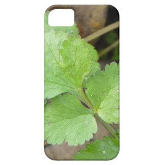 Cilantro iPhone 5 Covers
